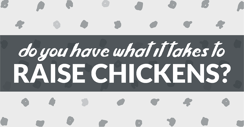do you have what it takes to raise chickens?
